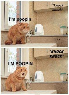 I laughed entirely tooooo hard at this! CRYING!!!