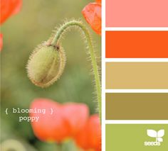Love this color pallet