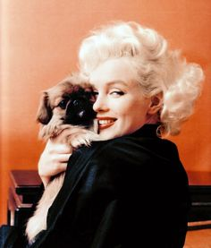marilyn animal lovers, animals, marilyn monroe, dogs, pet, milton green, puppy pictures, puppi, feelings