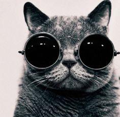 cat/shades