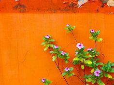 LOVE this color of orange!