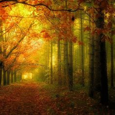 Autumn - my favorite time of year.