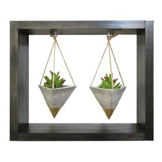 Air Plant Display, W