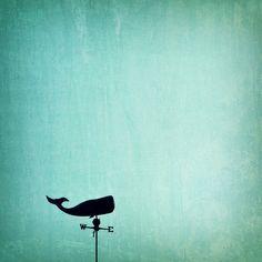 photography, nautical photography, nautical decor, wall art, whale print, beach, whale, ocean, pool -  Easterly Whale, 5x5 photograph