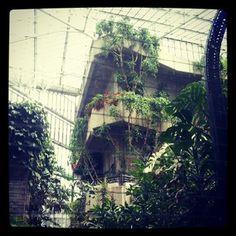Barbican Conservatory | Webstagram - the best Instagram viewer