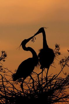 Great Blue Heron Silhouette by Michael Wolf