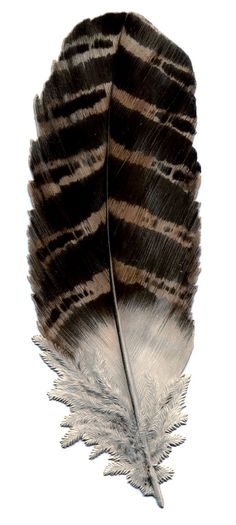Free print of vintage feather.  Would be beautiful in a small frame.