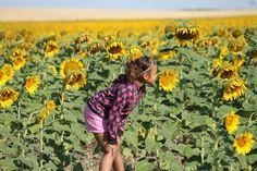 Beautiful sunflowers. Facebook fan, Tina Brooks shared this photo of a stop on their trip to the Badlands.