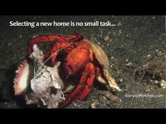 How hermit crabs select a home (hint: how do you select a new pair of jeans?)