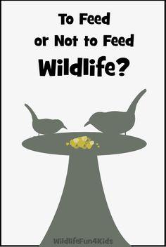 Should you be feeding wildlife? | Wildlife Fun 4 Kids