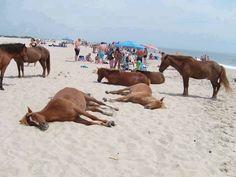 Horses enjoying the beach!