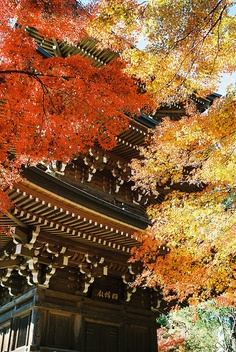 Shakujii Tokyo, Japan -- Repinned by Gold Suites Vacation Rentals http://goldsuites.com #travel