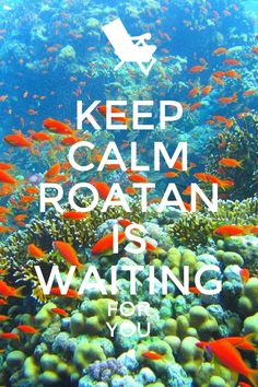 ROATAN is waiting for you