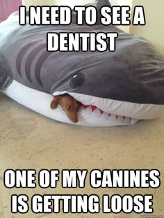 I need to see a dentist one of my canines is loose - ha ha  #shark