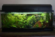 My planted betta tank