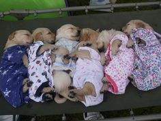 Ni-night puppies...I think I just ovulated from looking at these bundles of precious.