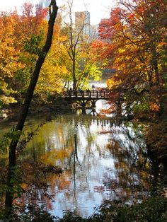 Oak Bridge at Bank Rock Bay. By Faith Stern. #fallfoliage #centralpark fall foliag, faith stern, oak bridg, john stern, bank rock, rock bridg, bridges, central park, fallfoliag centralpark