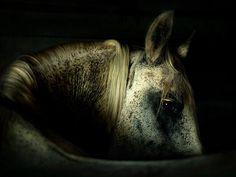 Horse looking back taken by Wojtek Kwiatkowski