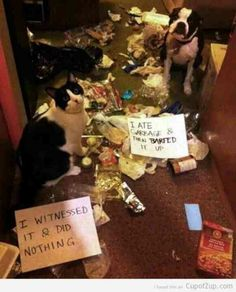 Pet shame - OMG - How cute is this?