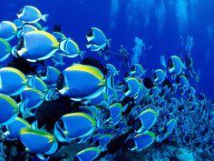 tropical fish | Tropical Fish Wallpaper