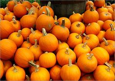 New England Fall Food Festivals
