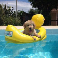 puppy in a pool