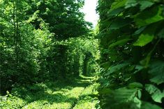 Secret Train Tunnel of Love In Ukraine (4)