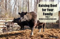 Raising Beef for Your Family