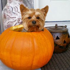 Fall Pet Care Tips for Cats and Dogs - Some good tips for our four legged family members!