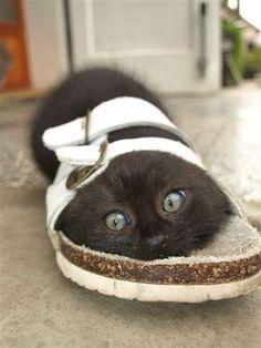 puss in sandal