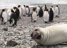 10 Hilarious Animal Photobombs - GlobalAnimal.org