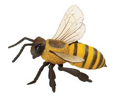 Google Image Result for http://www.theinformationarchives.com/Bee/images/10_honey-bee.jpg