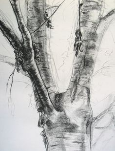 tree charcoal drawing | Trees 1 Charcoal Landscape