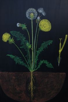 """You Cannot Pick a Dandelion-An early lesson in botany-  """"Every living thing is a world performance."""" This is the heart of it a realization that illuminates not only  botany but every human life and action   A great story about the dandelion to share. http://www.waldorflibrary.org/Journal_Articles/dandelion.pdf"""
