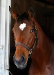 Reigning 2011 Horse of the Year Havre de Grace at Keeneland during the 2012 Spring Meet. Photo by Z.