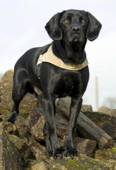 In 2010 military working dog Treo, from 104 Military Working Dogs, St George's Barracks in Oakham, Leicestershire, received the Dickin Medal for sniffing out IEDs and saving the lives of the soldiers he was patrolling with while on duty in Afghanistan.
