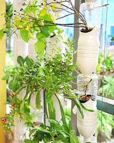 Grow it Yourself: Hydroponic Gardening in Your Home - Martha Stewart Home & Garden