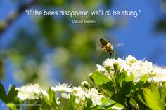 """If the bees disappe"