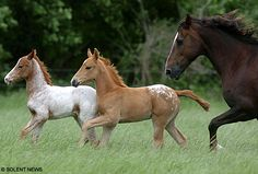 Twin foals