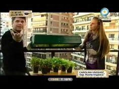 huerta en casa #7 : LECHUGA & RUCULA