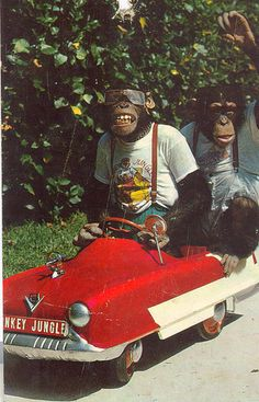 monkeys in clothes by baikinange, via Flickr