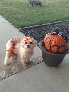 Dog Halloween Costume Contest: Annabelle
