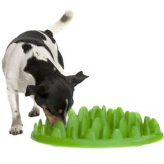 Give your pet added stimulation (and slow down fast eaters) with this food puzzle. ($39.99)