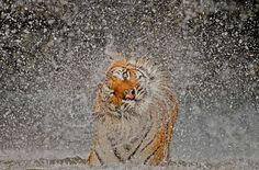 Winners of the National Geographic Photo Contest 2012 - In Focus - The Atlantic