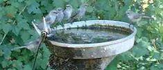 creative bird baths