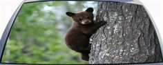 Cub Bear Hangs Onto Tree Custom Rear Window Graphic Mural for you car or truck.
