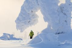 Frozen trees in Pyhä, Finnish Lapland by Visit Finland, via Flickr.