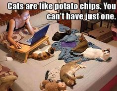 Potato cats…