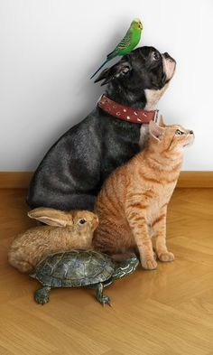 'Family' portrait. Dog, cat, rabbit, turtle, bird