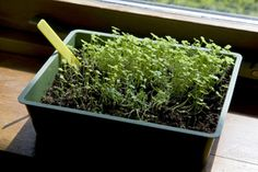 Indoor Container Gardening | Stretcher.com - Yes, you can have a vegetable garden indoors!